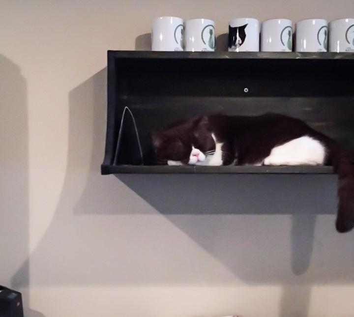 Schlafender Stubentiger im Cafe Katzentempel