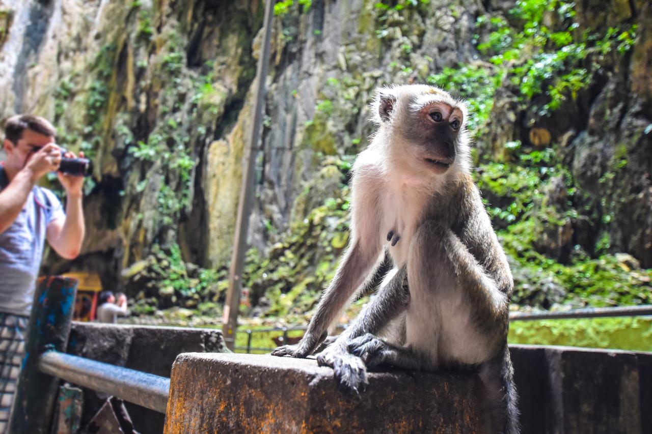 Äffchen in den Batu Caves