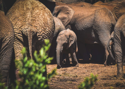 Addo Nationalpark - Elefantenbaby